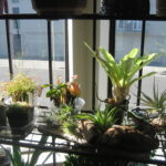 How to Take Care of your Houseplants