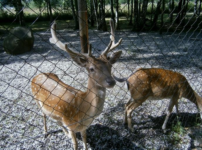 Identification Of Best Deer Barrier For Protection Of Personal Farm And Garden Area